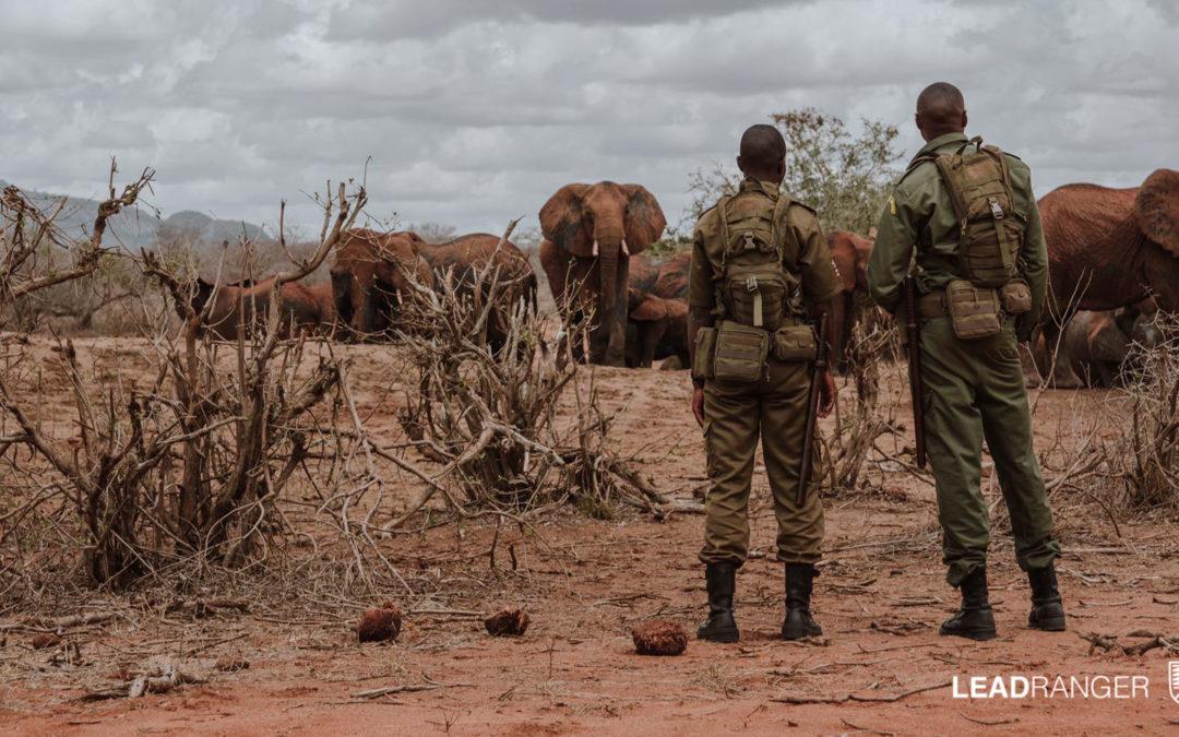 The Fine Line between Wildlife and Communities