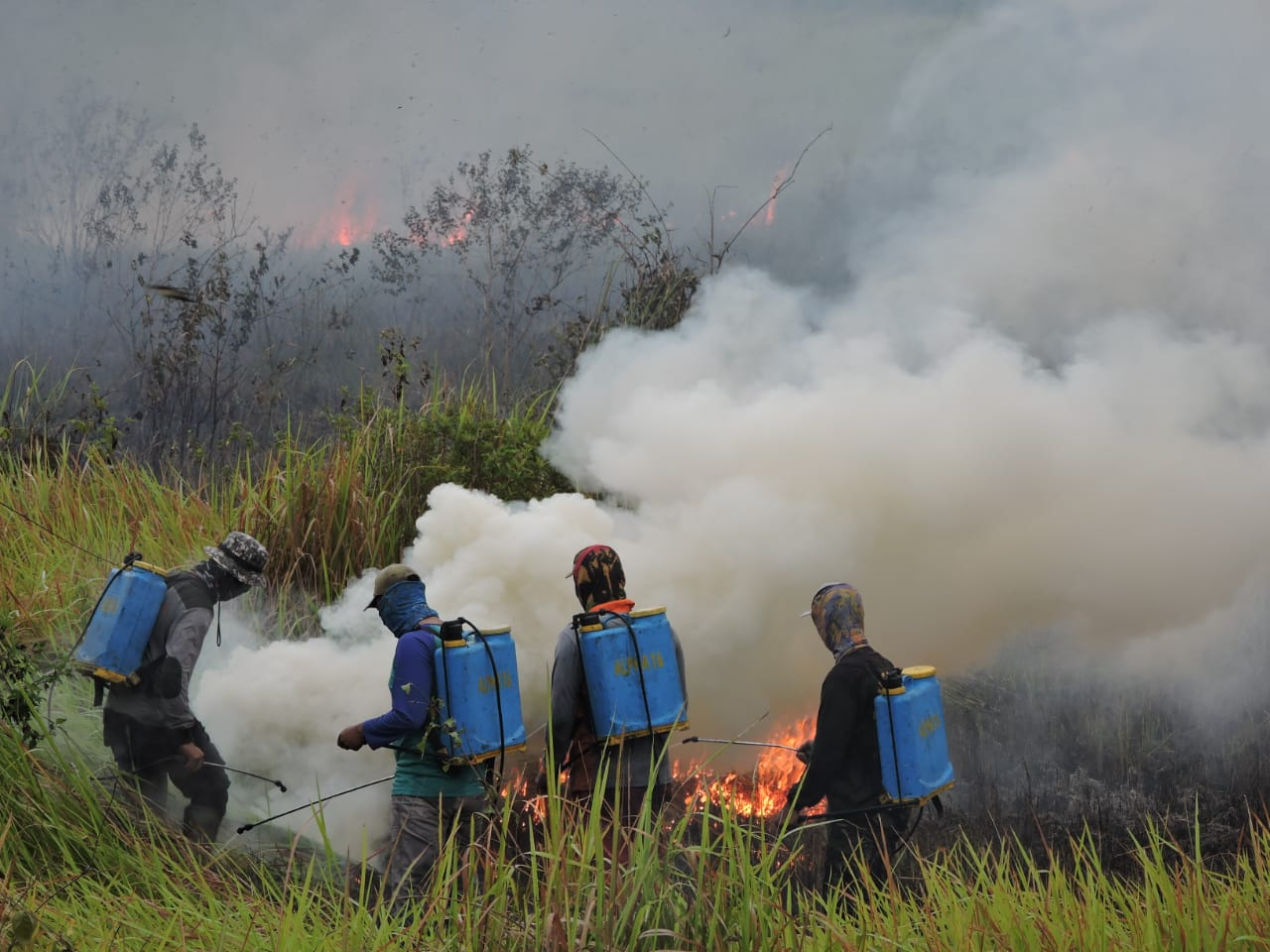 A group of Rangers with water backpacks prevent a fire from spreading into Way Kambas National Park.